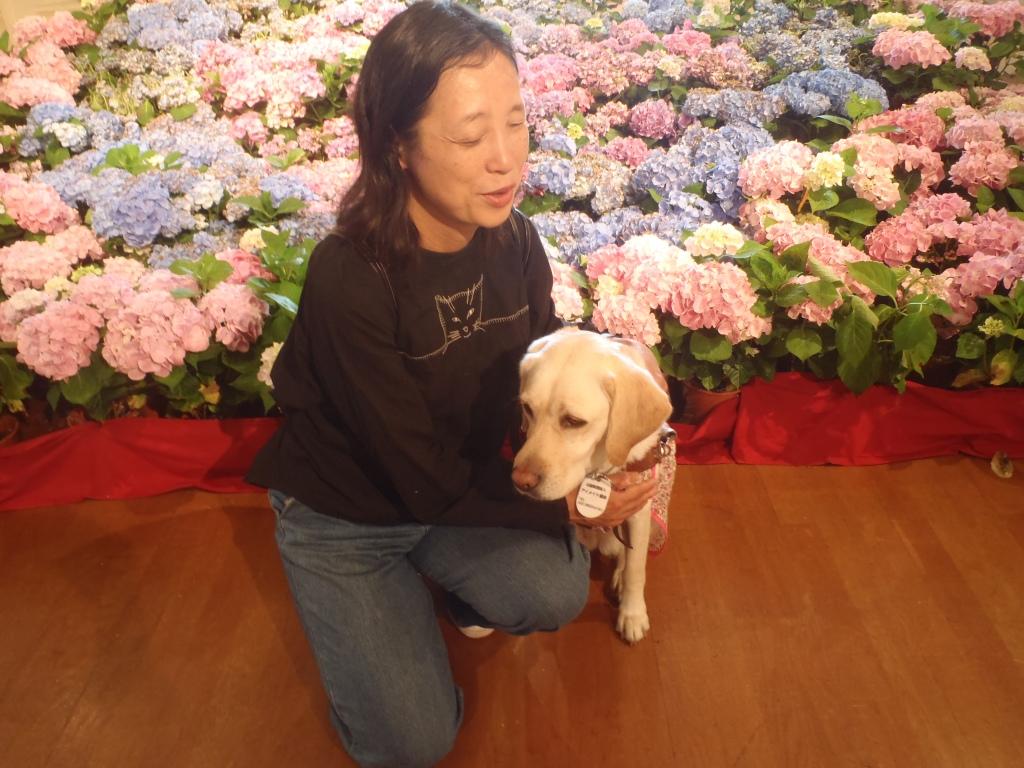 Yukiko san è seduta vicino al suo cane guida Lime chan. Vicino a loro ci sono delle splendide ortensie